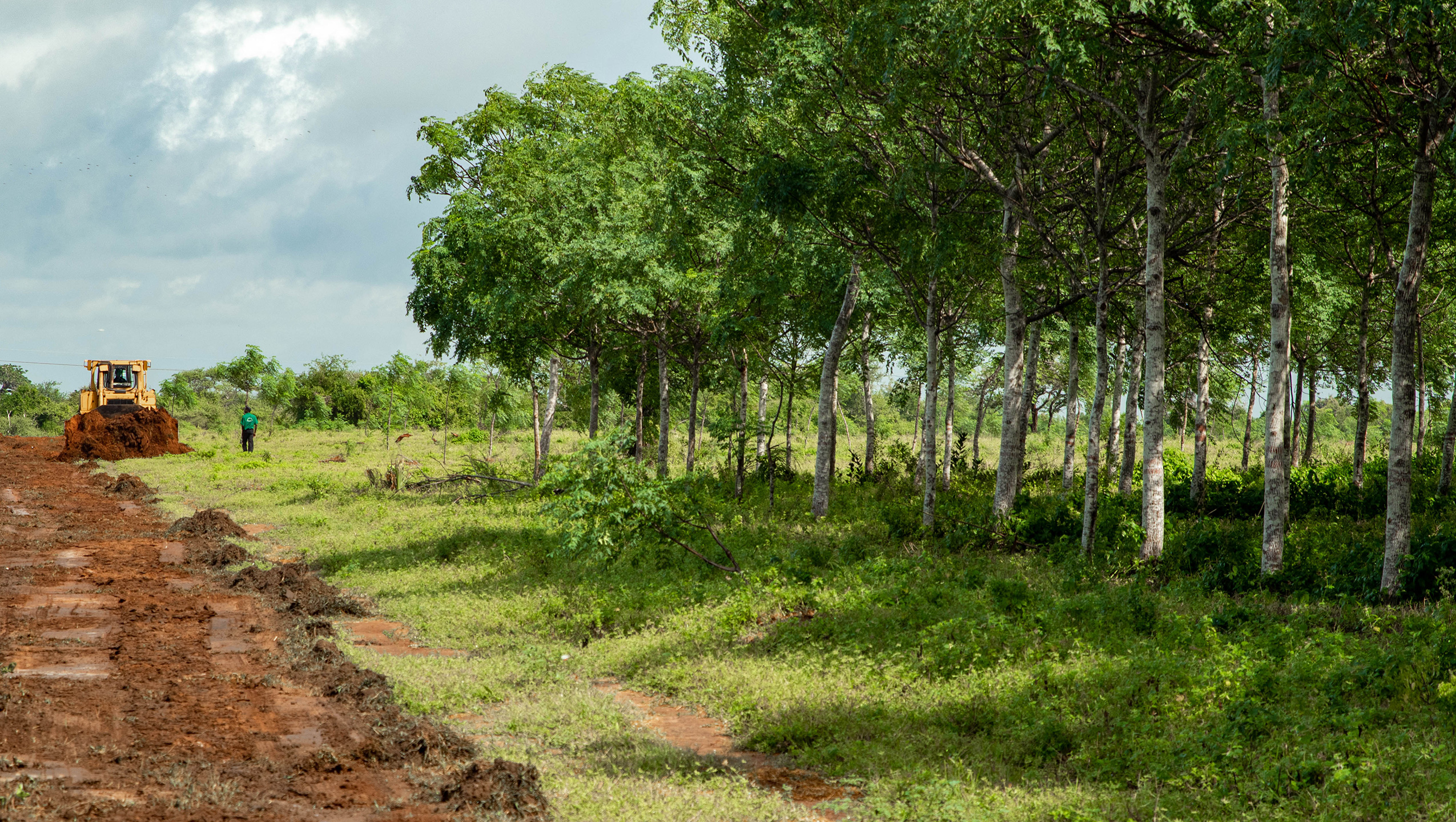 Plantio de árvores reduz a ameaça climática